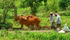 """مزارعو اليمن يشكون عبث """"الانتقالي"""" بمحاصيلهم"""
