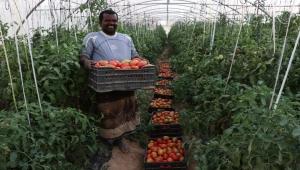 الفاو: تعلن عن دعم ألمانيا للزراعة في اليمن بمبلغ 18 مليون يورو