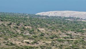 """سقطرى..الحكومة تقر إعلان غابة """"فرمهن"""" محمية طبيعية"""