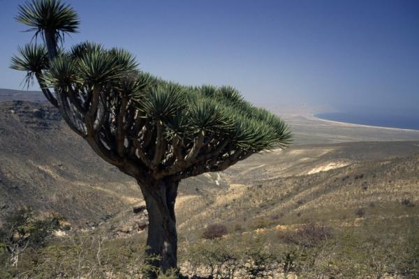 عالم أحياء شهير يتحدث عن عِظَم العلاقة الروحية بين السقطريين وحيواناتهم وأشجارهم