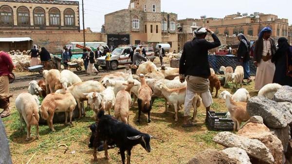 اليمنيون يعزفون عن شراء الأضاحي مع ارتفاع أسعارها